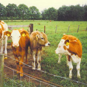 dieren bij de Broeksehoeve