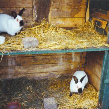 konijnen bij de Broeksehoeve