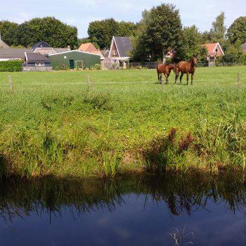 Paarden bij de Broeksehoeve